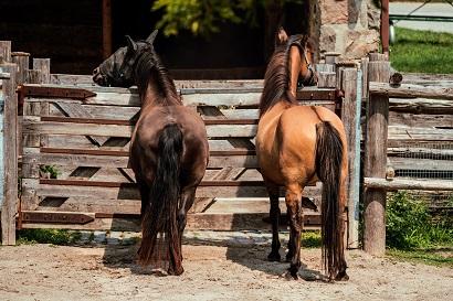 horses Montana ranch
