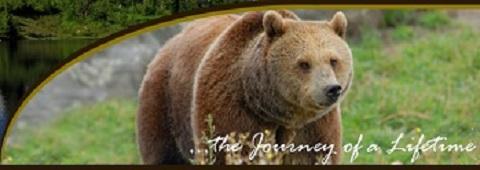 Grizzly bear Montana