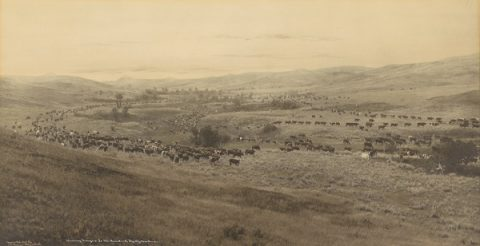 Cattle Montana history